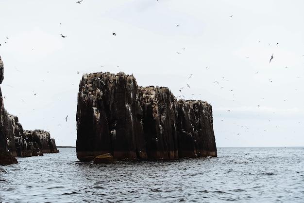 Bando de aves marinhas voando sobre as ilhas farne em northumberland, inglaterra