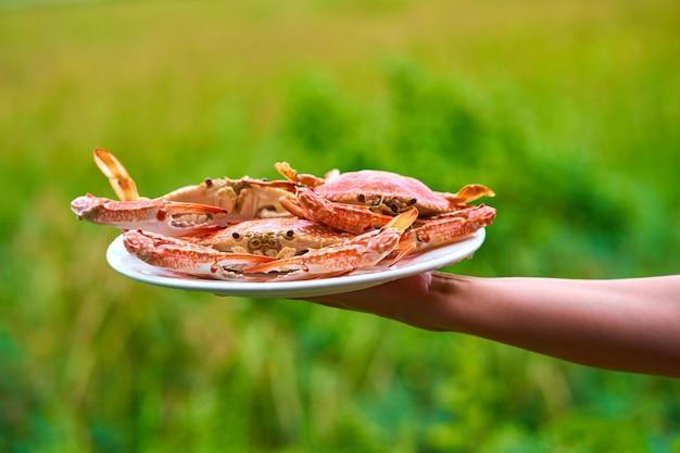 Bando de caranguejos azuis cozidos frescos em chapa branca sobre fundo verde de campo.