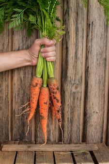 Bando de cenouras frescas na mão