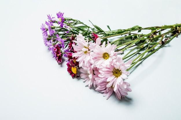 Bando de daises multicoloridos