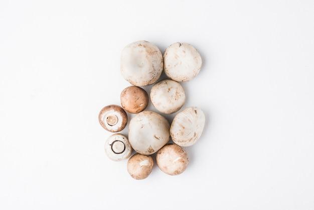 Bando de deliciosos cogumelos