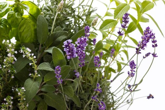 Bando de ervas frescas