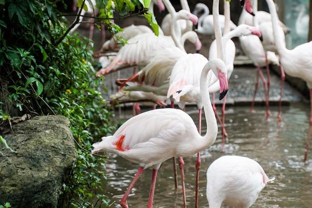 Bando de flamingo no parque zoológico