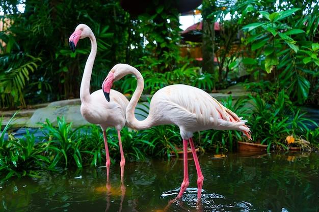 Bando de flamingos cor de rosa na lagoa do zoológico.