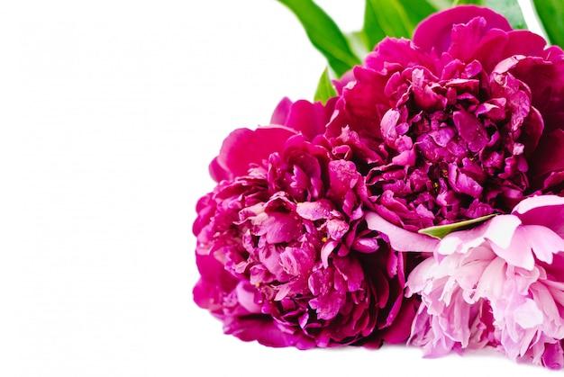 Bando de flores de peônia isolado