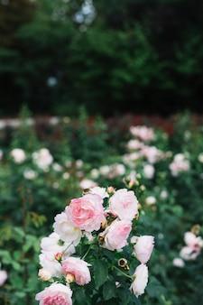 Bando de flores frescas de brancas e rosa