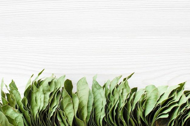 Bando de folhas de louro em branco de madeira com espaço para texto