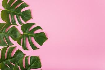 Bando de folhas verdes em rosa
