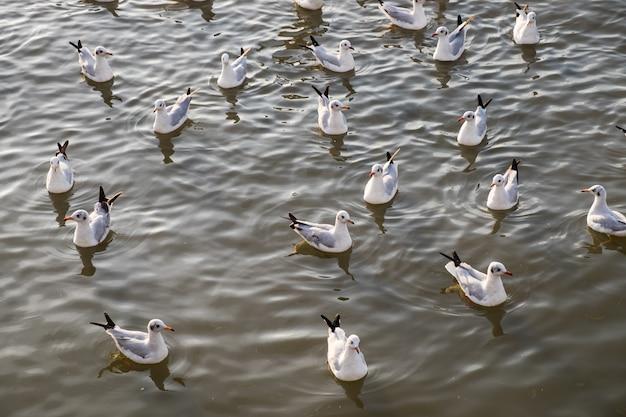 Bando de gaivota flutuando no mar