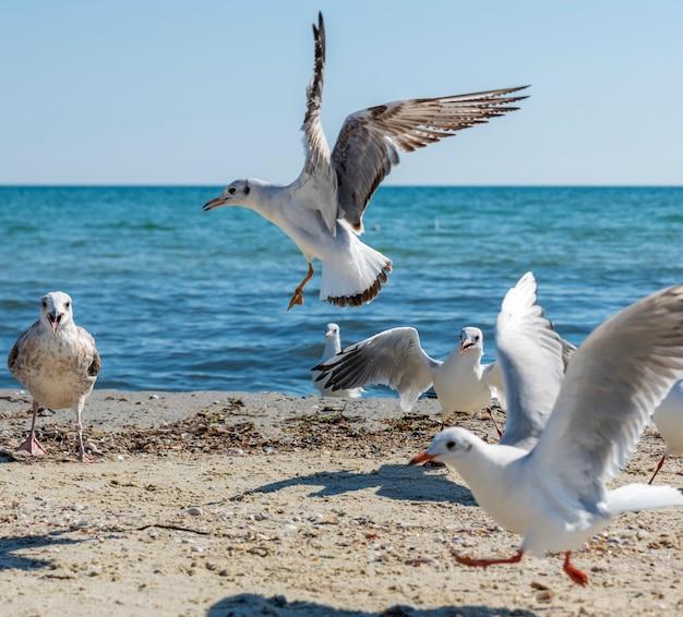 Bando de gaivotas brancas voa na costa do mar negro em um dia de verão