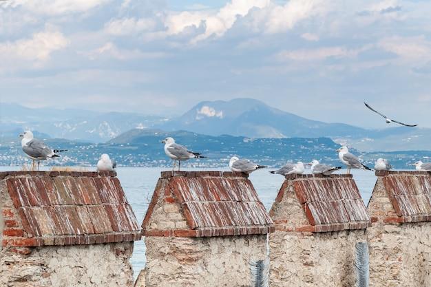Bando de gaivotas sentar no telhado de telha
