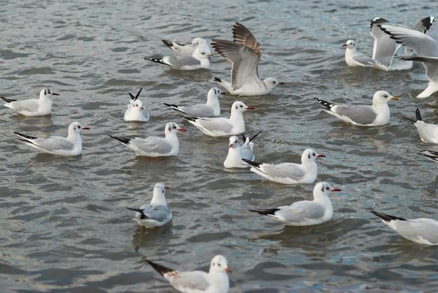 Bando de gaivotas voando acima do mar.