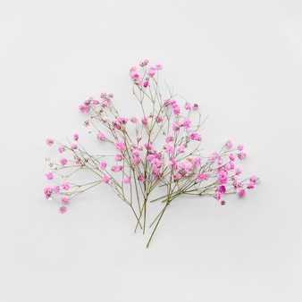 Bando de galhos de flores suaves