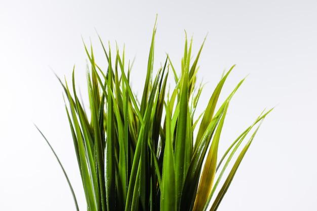 Bando de grama verde isolado