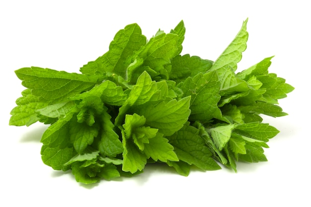 Bando de hortelã fresca, isolado no fundo branco. plantas verdes perfumadas com um aroma rico.