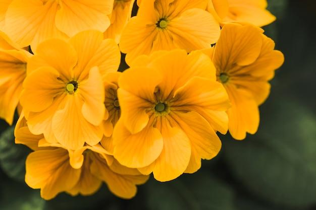 Bando de incríveis flores frescas amarelas