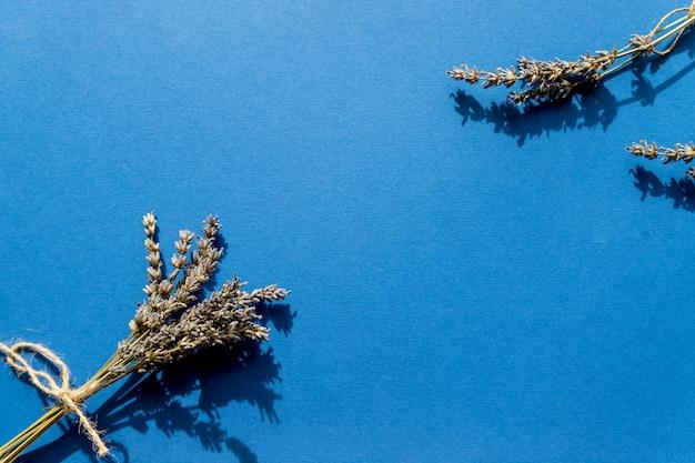 Bando de lavanda isolado na parede azul. suplemento de chá, chá de ervas. colheita de lavanda inglesa em agosto. colheita e perfumaria caseiras de lavanda inglesa, sementes de flores. copie o espaço