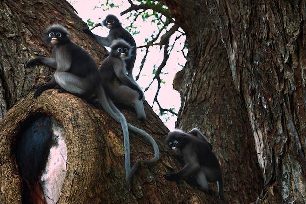 Bando de macacos de folhas escuras em um grande galho de árvore