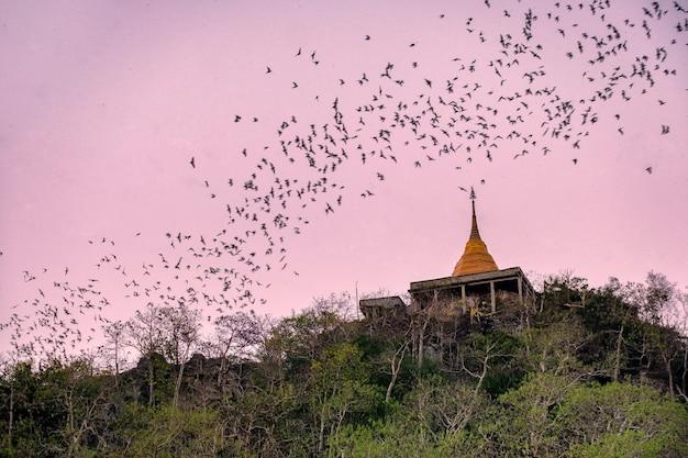 Bando de morcegos voando pelo pagode dourado para caçar comida à noite