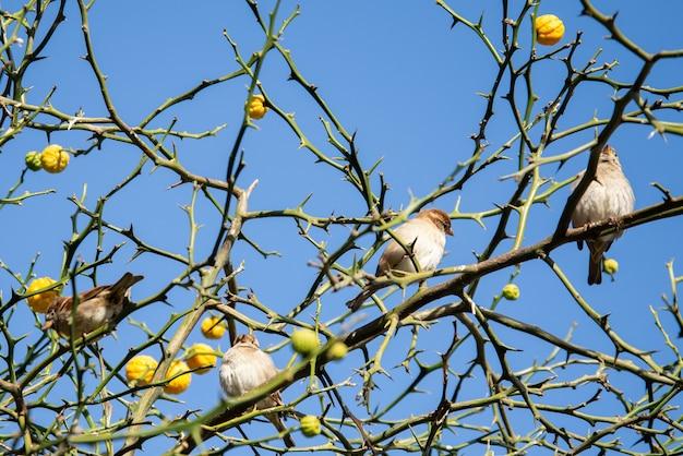 Bando de pardais sentado em um galhos de árvores
