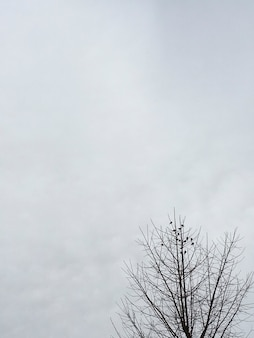 Bando de pássaros nas pontas das árvores com céu nublado