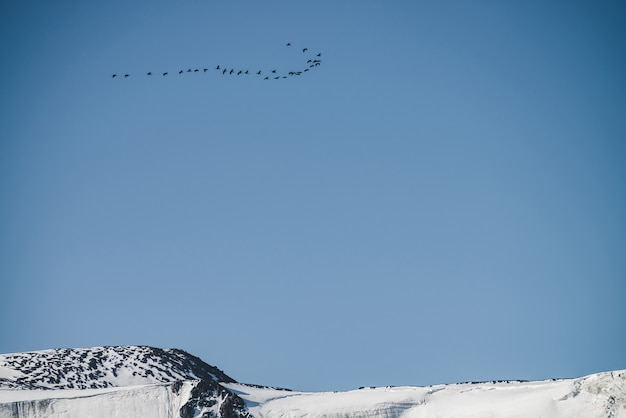 Bando de pássaros no céu azul sobrevoando o cume da montanha nevada