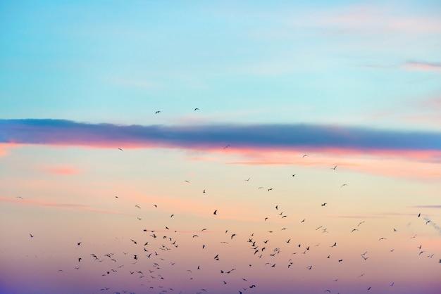 Bando de pássaros no céu colorido do pôr do sol