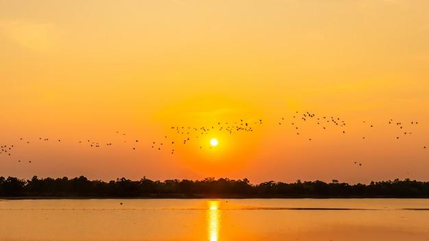 Bando de pássaros no reservatório, sombra do pôr do sol, gaivota