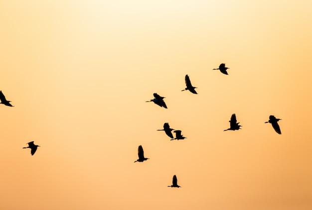 Bando de pássaros silhueta no céu ao pôr do sol