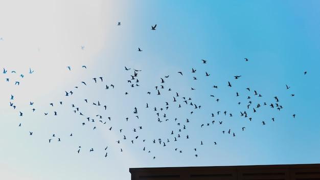 Bando de pássaros voando