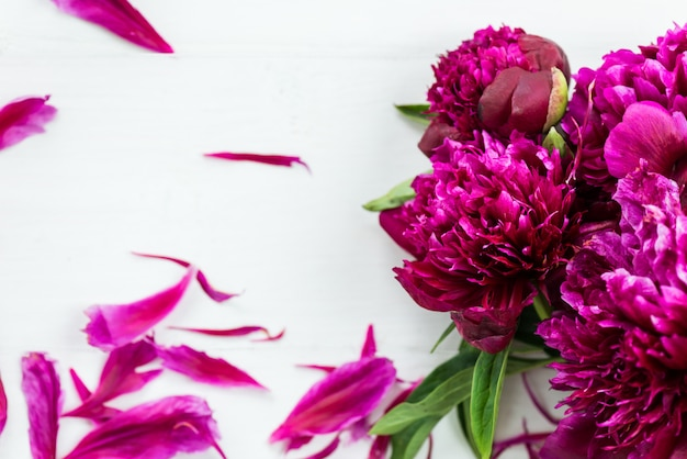 Bando de peônias roxas escuras sobre fundo claro