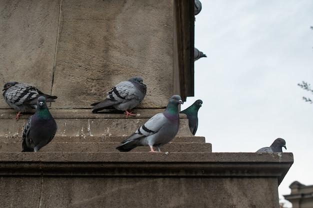 Bando de pombos empoleirados em um prédio de concreto durante o dia