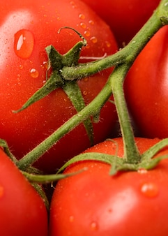 Bando de tomate close-up