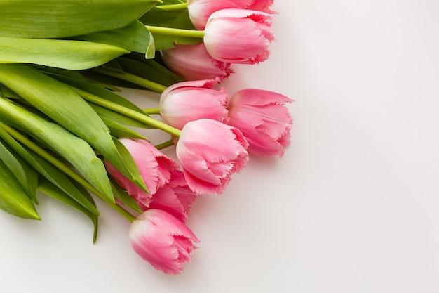 Bando de tulipas cor de rosa em fundo branco
