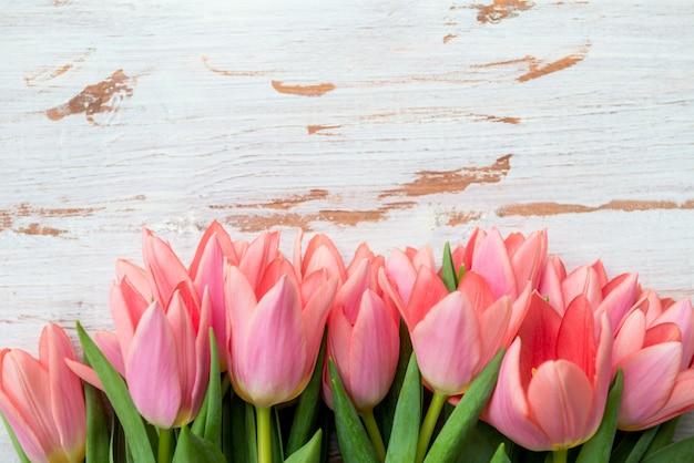 Bando de tulipas cor de rosa