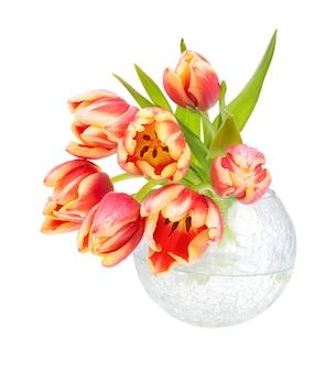 Bando de tulipas listradas laranja em vaso de vidro branco