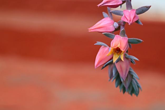 Bando fechado de flores rosa e roxo