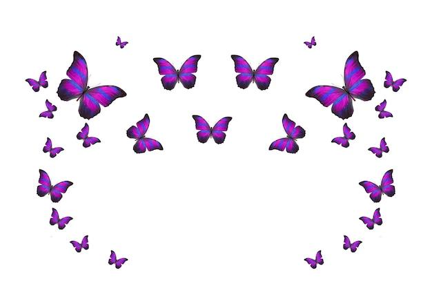 Bando tropical de borboletas coloridas a voar isoladas em branco. mariposas tropicais. insetos voadores. foto de alta qualidade