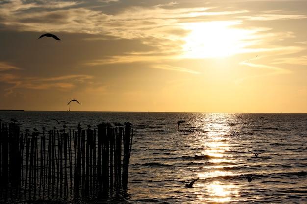 Bandos de gaivotas voando em bangpu tailândia