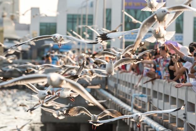 Bang pu e visitantes alimentando milhares de gaivotas