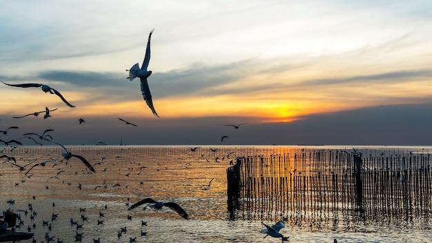 Bang pu. tailândia. 19 de dezembro - 2020: as pessoas assistiram ao pôr do sol em bang pu, há muitas gaivotas voando, centro de recreação, tailândia.
