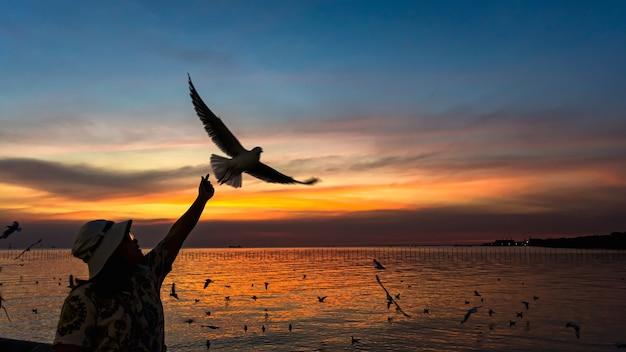 Bang pu, tailândia. 19 de dezembro de 2020: mulher entregando comida em mãos para gaivota voando no céu de verão em bang pu, tailândia.