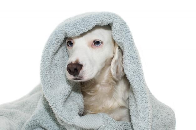 Banho de cachorro