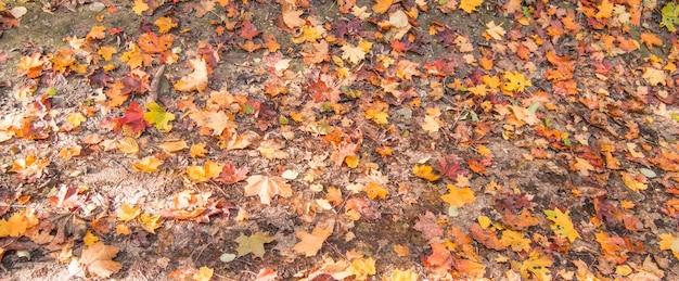 Banner com bordos coloridos, um lugar para texto, fundo de outono.