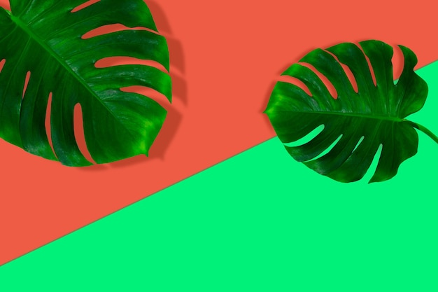 Banner criativo com folhas tropicais em fundo geométrico de cores vibrantes. folheto para anúncio. design para cartões de convite, folhetos. modelos de design abstrato para cartazes, capas, papéis de parede.
