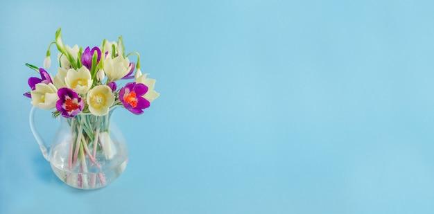 Banner de cartão comemorativo para férias de primavera, lindas flores de prímulas em um fundo azul com espaço de cópia
