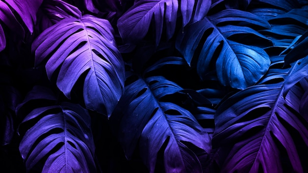 Banner de folha monstera tropical neon