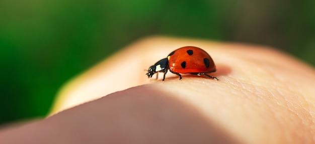 Banner de joaninha disponível, conceito de reunião de natureza e pessoas, foto de close-up de macro de inseto