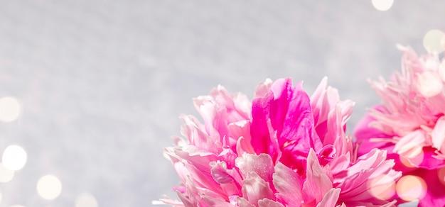 Banner festivo com cabeças de peônias rosa frescas close-up e luzes de bokeh em cinza claro. cartão de felicitações para o dia dos namorados, dia das mães, feminino mensal, dia internacional da mulher. copie o espaço para o texto.