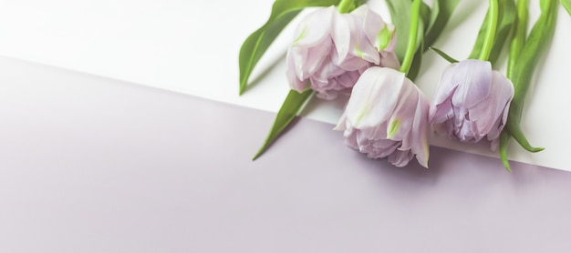 Banner floral largo com botões de tulipa e folhas em um fundo de mesa azul frio.